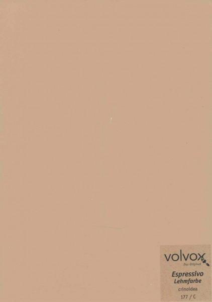 Volvox Espressivo Lehmfarbe - crinoidea